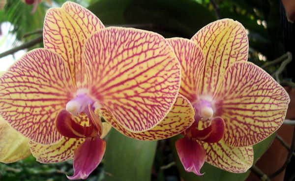 orchid_one